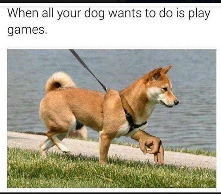 wholesome meme of a dog participating in the circle game