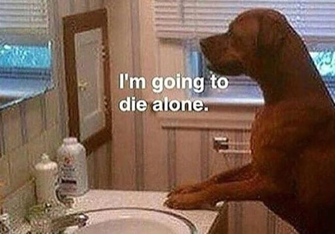 wholesome meme of a dog looking at the mirror and thinking about dying alone