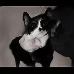 creepy - Cat