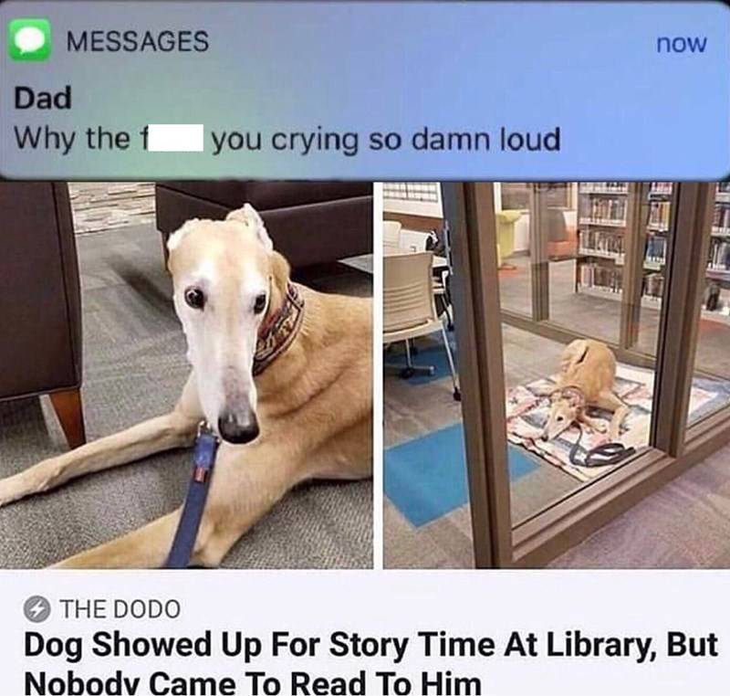 Product - MESSAGES now Dad Why the f you crying so damn loud THE DODO Dog Showed Up For Story Time At Library, But Nobody Came To Read To Him