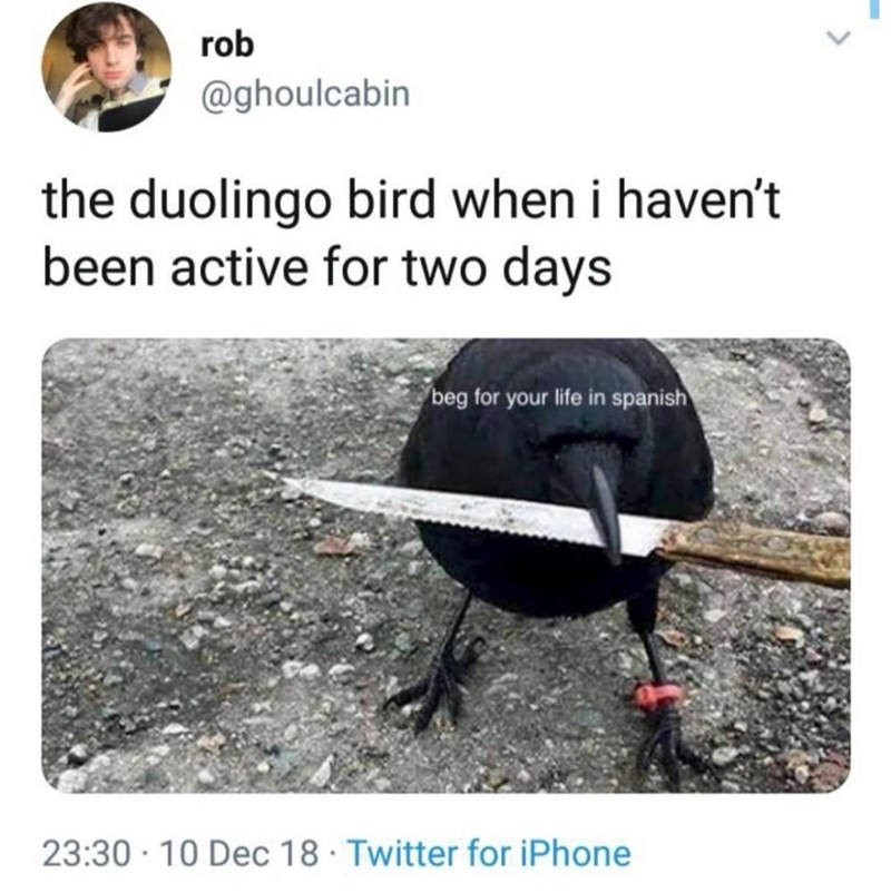 silly meme about the duolingo bird threatening you to practice