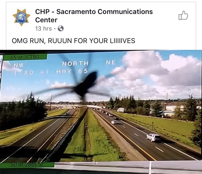 silly meme of a traffic camera showing a giant spider