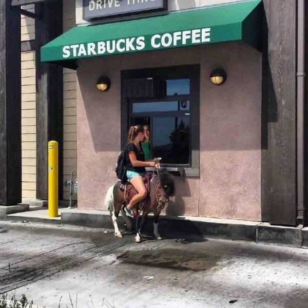 Horse - DRI STARBUCKS COFFEE
