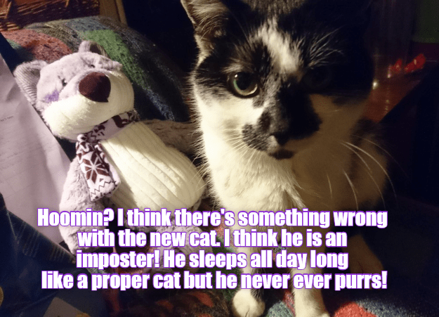 There\'s something wrong with the new cat