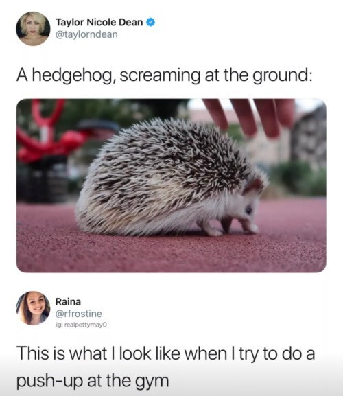 Hedgehog - Taylor Nicole Dean @taylorndean hedgehog, screaming at the ground: Raina @rfrostine ig: realpettymayo This is what I look like when I try to do a push-up at the gym