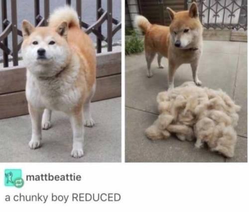 Dog - mattbeattie a chunky boy REDUCED