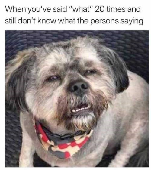"Dog - When you've said ""what"" 20 times and still don't know what the persons saying"