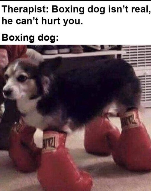 Dog - Therapist: Boxing dog isn't real, he can't hurt you. Boxing dog: