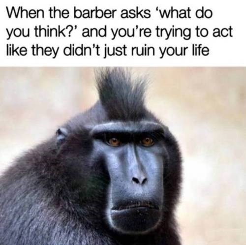 Vertebrate - When the barber asks 'what do you think?' and you're trying to act like they didn't just ruin your life