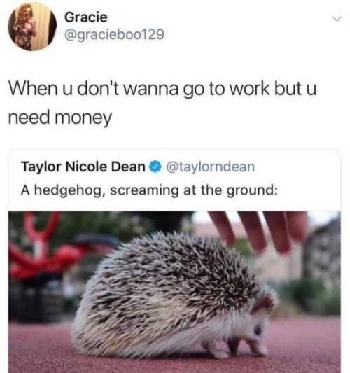 Hedgehog - Gracie @gracieboo129 When u don't wanna go to work but u need money Taylor Nicole Dean@taylorndean A hedgehog, screaming at the ground: