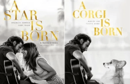 Text - A CORGI STAR IS BORN BORN