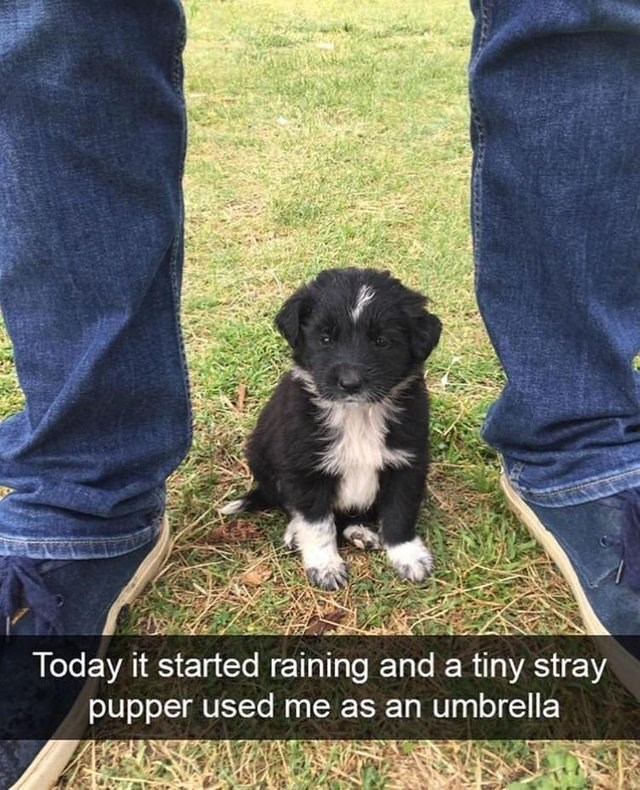 wholesome meme - Dog - Today it started raining and a tiny stray pupper used me as an umbrella