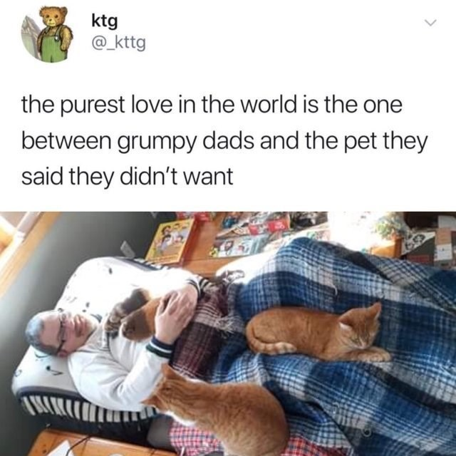 wholesome meme - Companion dog - ktg @_kttg the purest love in the world is the between grumpy dads and the pet they said they didn't want