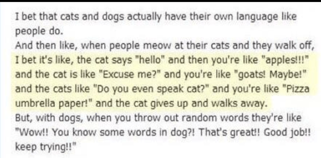 """wholesome meme - Text - I bet that cats and dogs actually have their own language like people do. And then like, when people meow at their cats and they walk off, I bet it's like, the cat says """"hello"""" and then you're like """"apples!!"""" and the cat is like """"Excuse me?"""