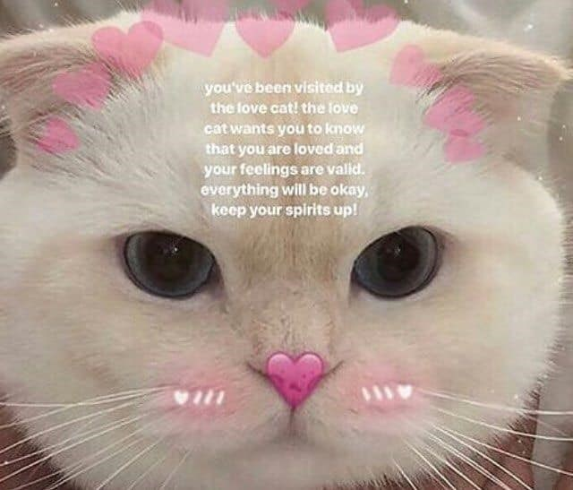 wholesome meme - Cat - you've been visited by the fove cat! the love cat wants you to know that you are loved and your feelings are valid. everything will be okay, keep your spirits up!
