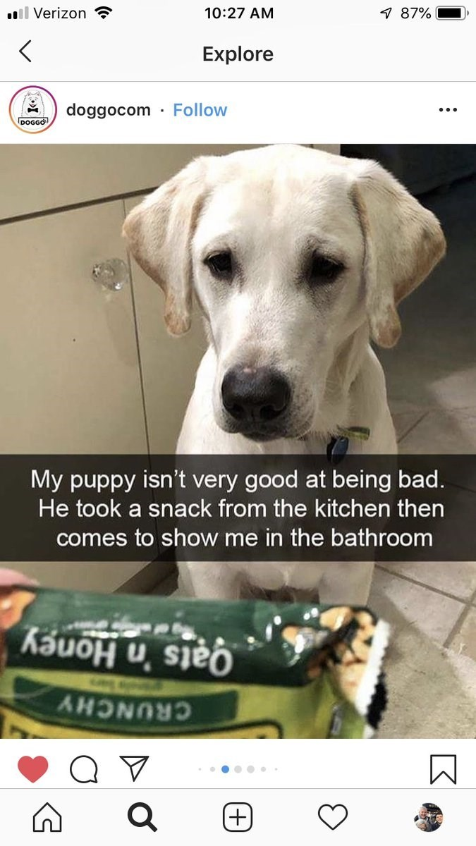 wholesome meme - Dog - 10:27 AM 7 87% ll Verizon Explore Follow doggocom DOGGO My puppy isn't very good at being bad. He took a snack from the kitchen then comes to show me in the bathroom Qats 'n Honey CRUNCHY (+)