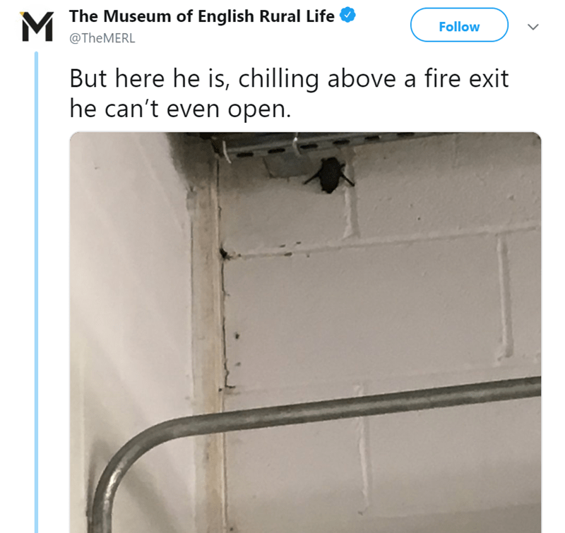 MThe Museum of English Rural Life Follow @TheMERL But here he is, chilling above a fire exit he can't even open.