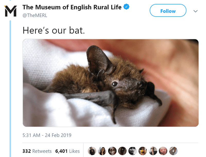 Ear - MThe Museum of English Rural Life Follow @TheMERL Here's our bat. 5:31 AM - 24 Feb 2019 332 Retweets 6,401 Likes