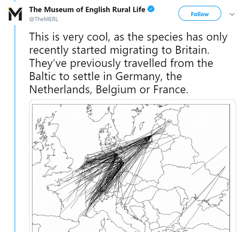 Text - The Museum of English Rural Life M Follow @TheMERL This is very cool, as the species has only recently started migrating to Britain. They've previously travelled from the Baltic to settle in Germany, the Netherlands, Belgium or France.