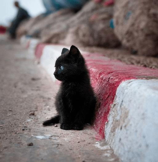 cute black kitten sitting on the roadside