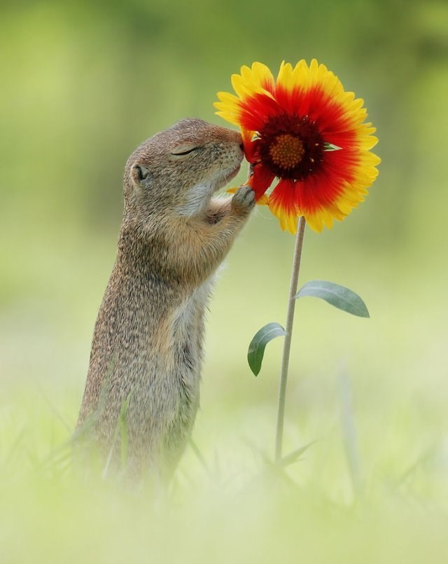 cute pic of a squirrel smelling a flower