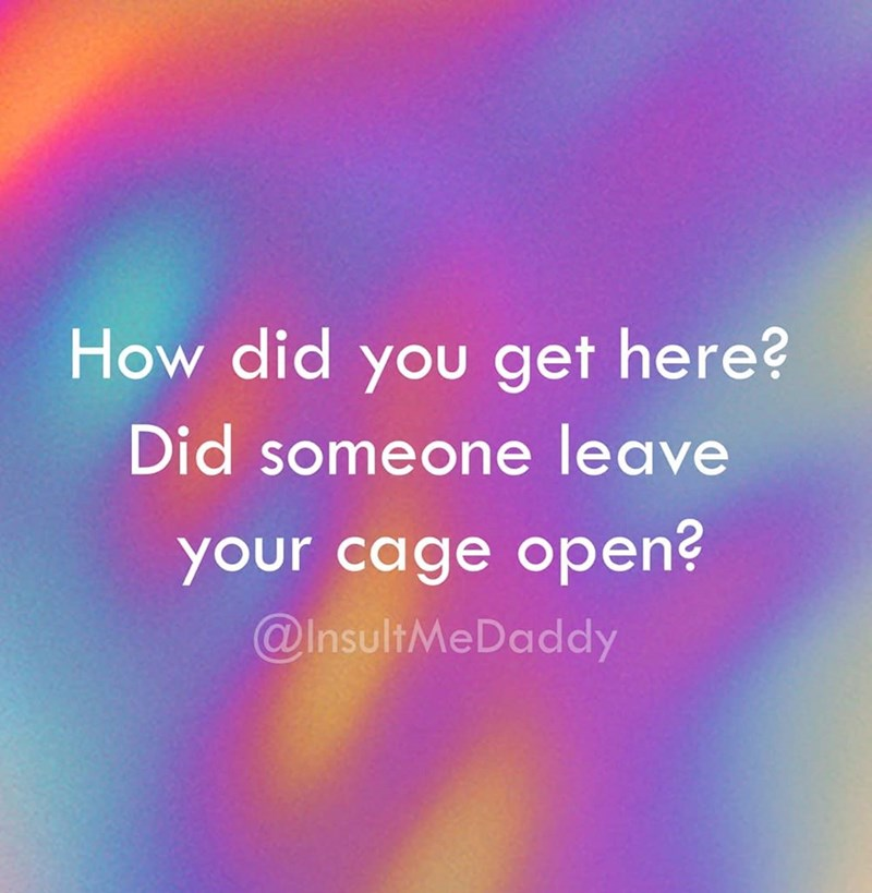 Text - How did you get here? Did someone leave your cage open? @InsultMeDaddy