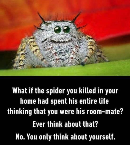 funny meme about killing your spider roommate