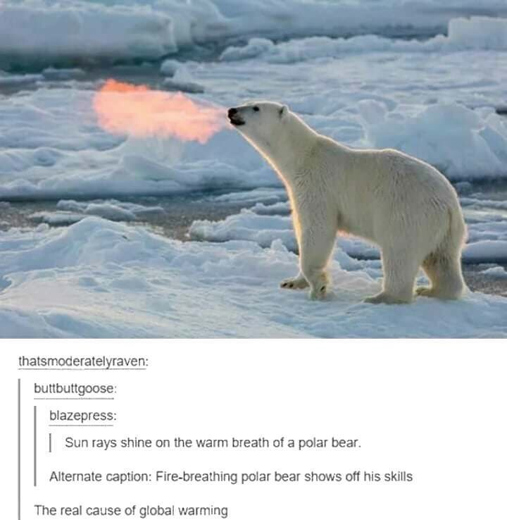 funny meme about fire breathing bears causing global warming