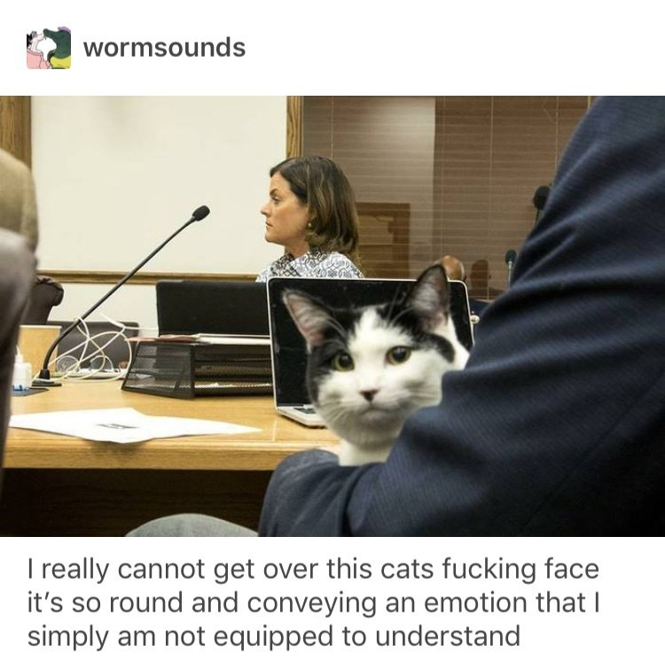 funny tumblr post cat sitting in man's lap in court room I really cannot get over this cats fucking face it's so round and conveying an emotion that I simply am not equipped to understand
