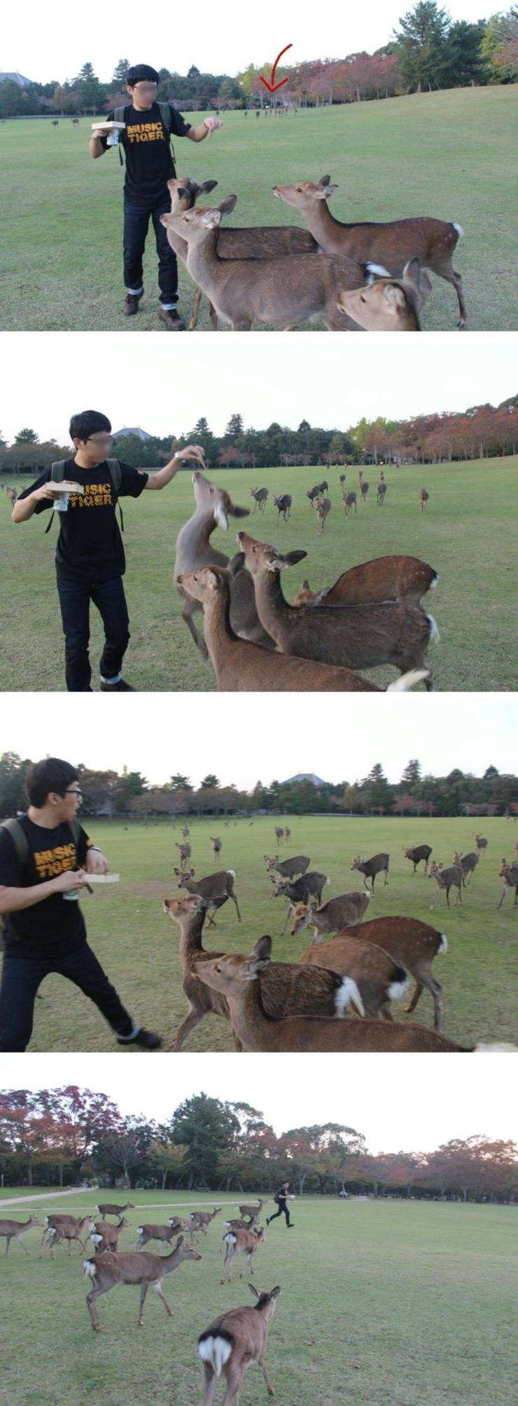 Pics of a guy feeding some deer; more deer run over to him to be fed and the guy starts running away