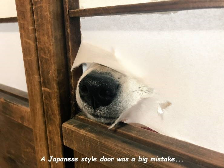 Panda - A Japanese style door was a big mistake...