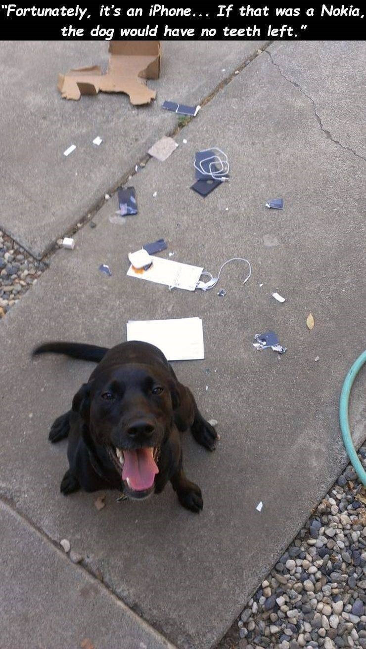 """Dog - """"Fortunately, it's an iPhone.. If that was a the dog would have no teeth left."""" Nokia,"""