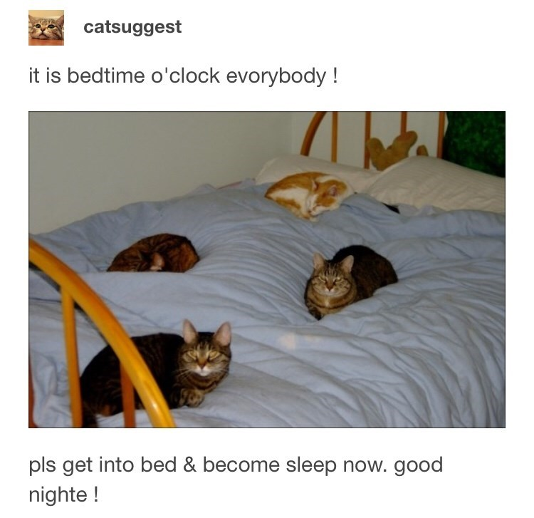 funny tumblr post four cats sitting on a bed it is bedtime o'clock evorybody! pls get into bed & become sleep now. good nighte!