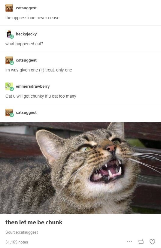 funny tumblr post picture cat opening mouth the oppressione never cease heckyjecky what happened cat? catsuggest im was given one (1) treat. only one emmersdrawberry Cat u will get chunky if u eat too many catsuggest then let me be chunk Source:catsuggest 31,165 notes