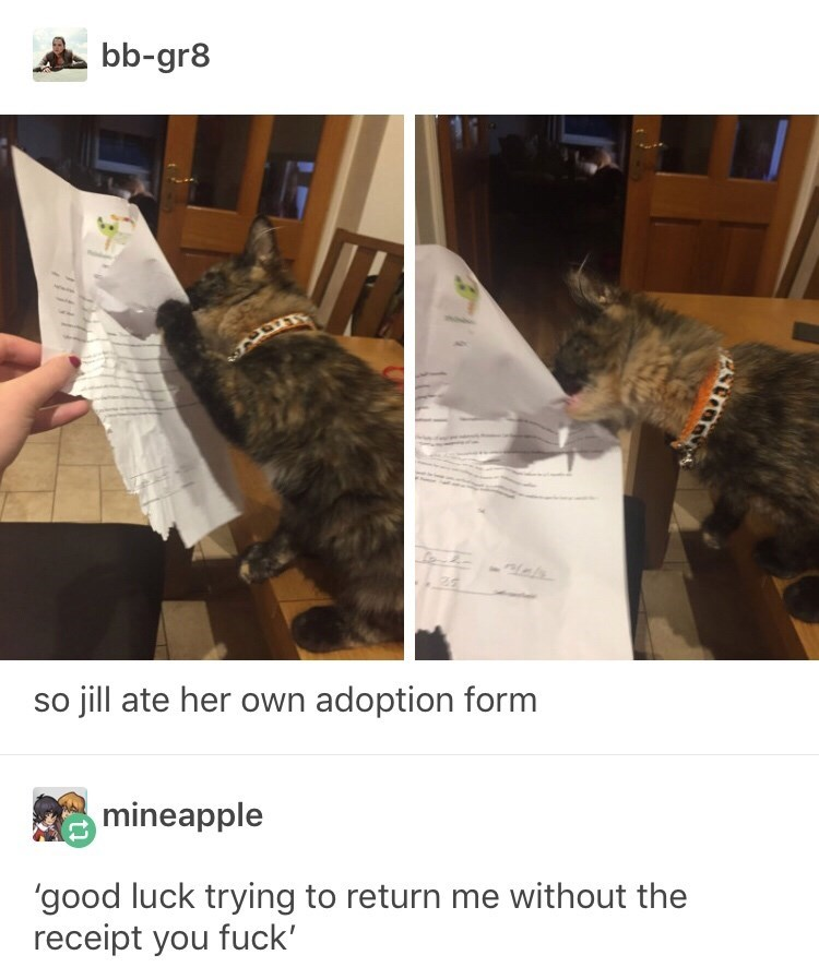 funny tumblr post picture dog eating paper so jill ate her own adoption form mineapple 'good luck trying to return me without the receipt you fuck'