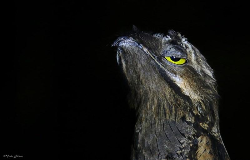 Bird - oVitek irinee