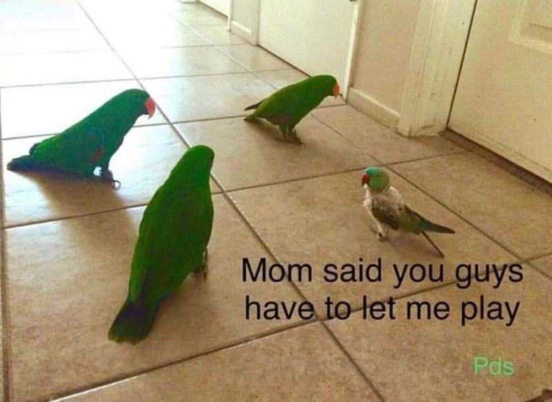 Bird - Mom said you guys have to let me play Pds