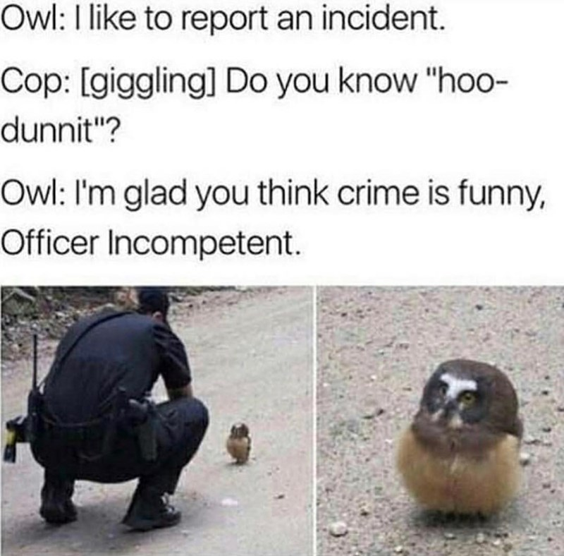 "Adaptation - Owl: I like to report an incident. Cop: [giggling] Do you know ""hoo- dunnit""? Owl: I'm glad you think crime is funny, Officer Incompetent."