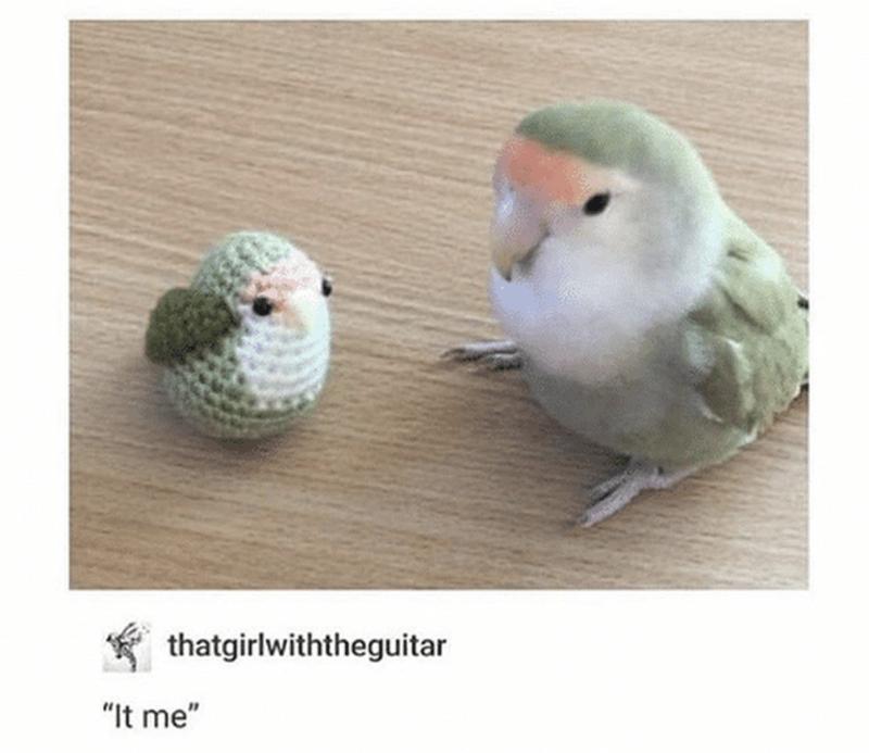 """Bird - thatgirlwiththeguitar """"It me"""""""