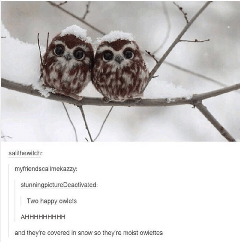 Owl - salithewitch: myfriendscallmekazzy: stunningpictureDeactivated: Two happy owlets АННННННННН and they're covered in snow so they re moist owlettes