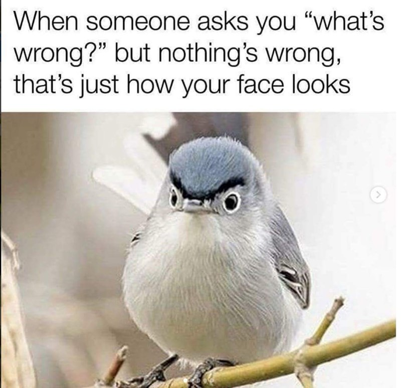 "Bird - When someone asks you ""what's wrong?"" but nothing's wrong, that's just how your face looks"