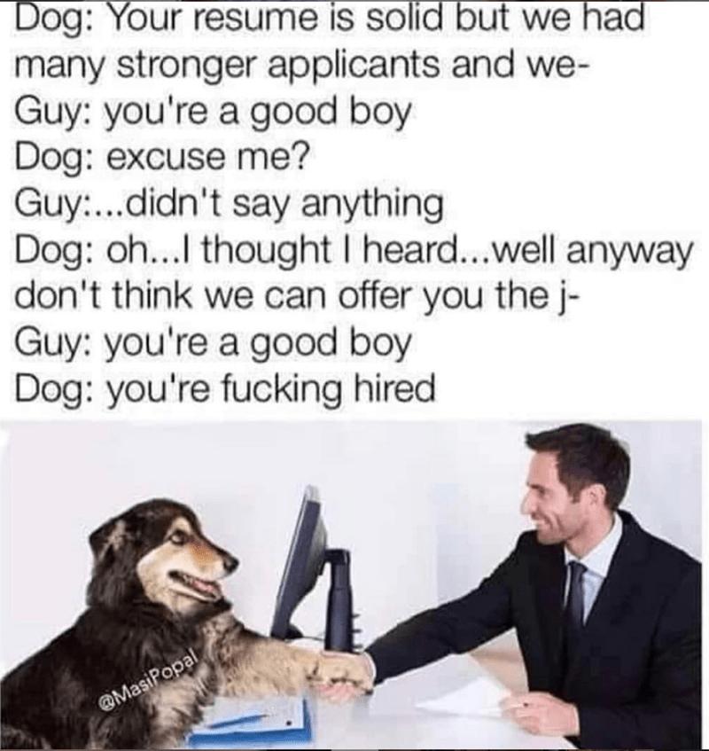 dog interviewing man in suit for job good boy dog meme