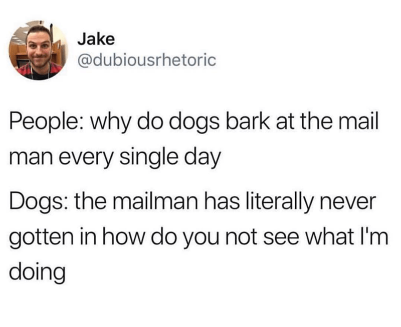 why do dogs bark at mailman twitter