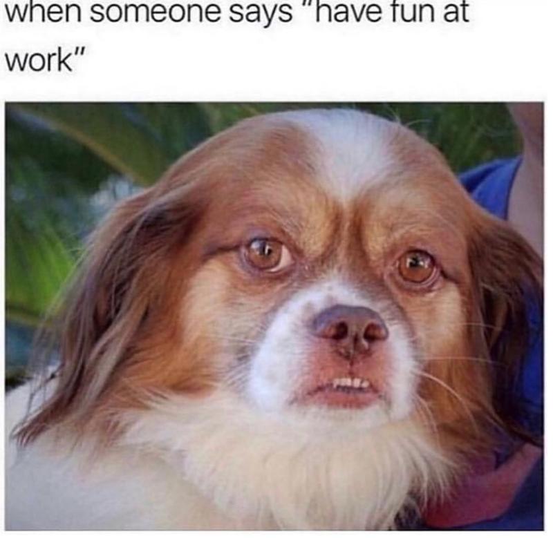 dog looking annoyed have fun at work dog meme