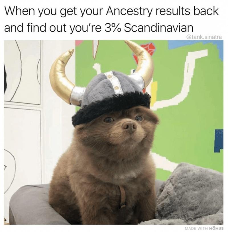 brown dog wearing viking hat dog meme