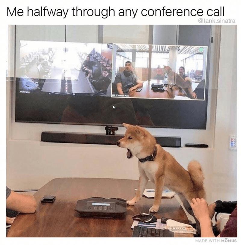dog standing on table in conference room barking dog meme