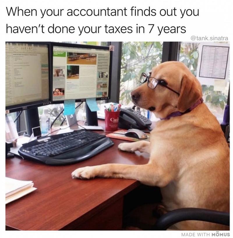 golden retriever sitting as desk wearing glasses accountant dog meme