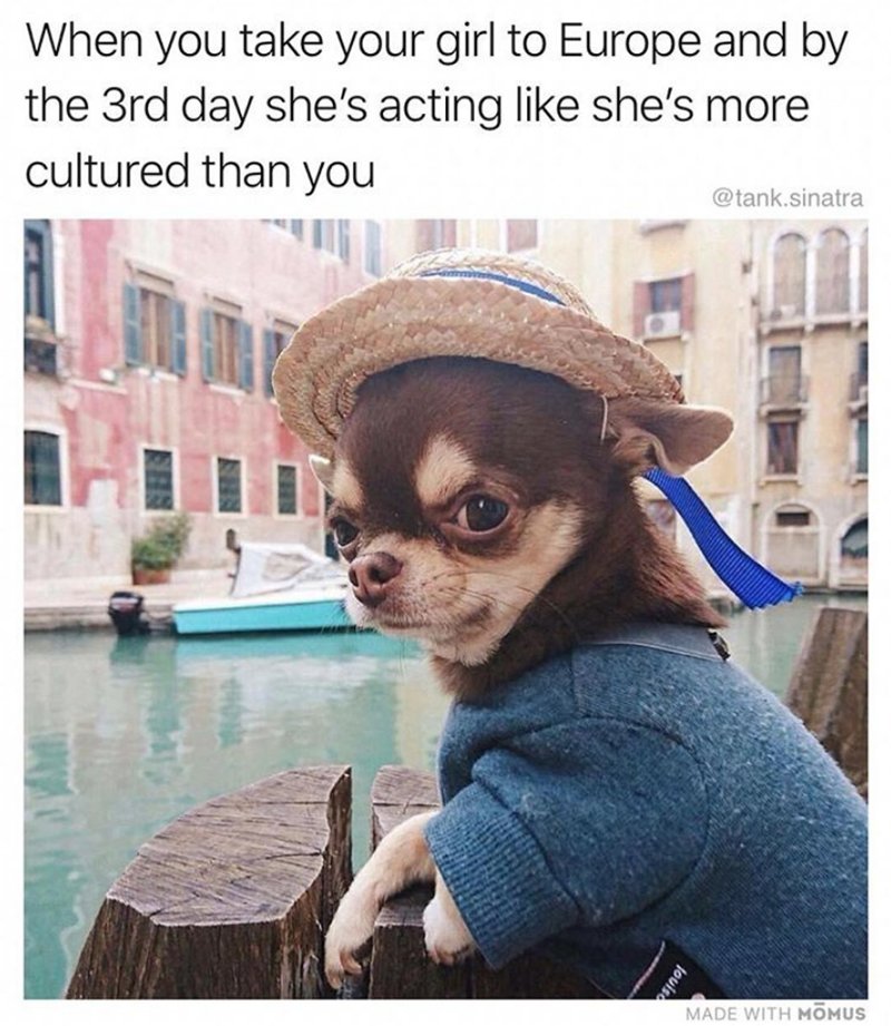 chihuahua on canal boat wearing blue jumper and straw hat with blue ribbon dog meme