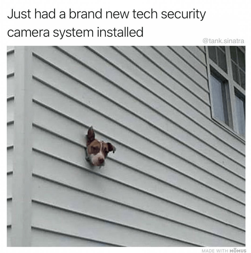 dog's head sticking out of wall of house looks like security camera dog meme