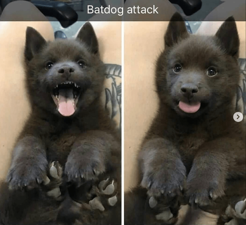 black fluffy puppy opening its mouth dog meme
